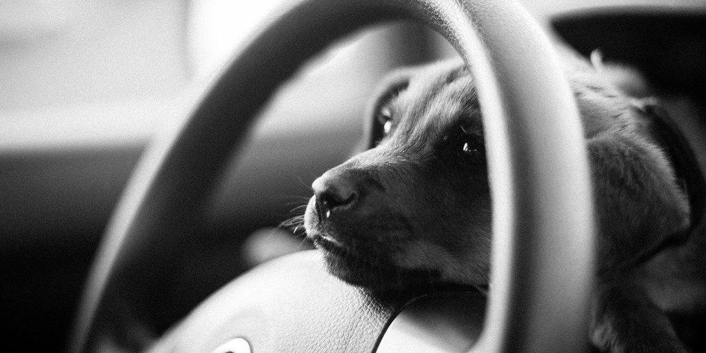 Tuck Driving