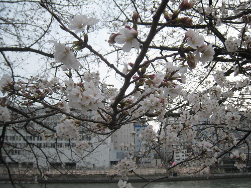 Yodo River Walk in spring