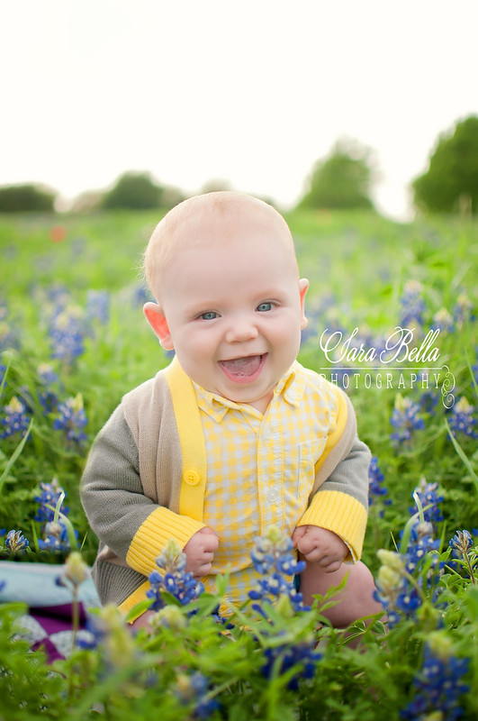 Bluebonnets-74-12-1web