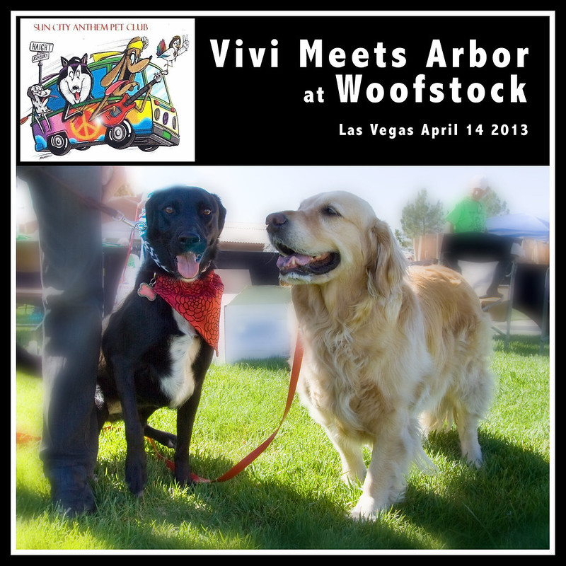 Meeting Arbor at Woofstock Las Vegas 2013