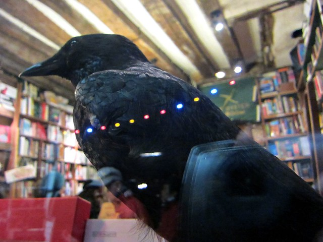 Taxidermy bird in Shakespeare & Company