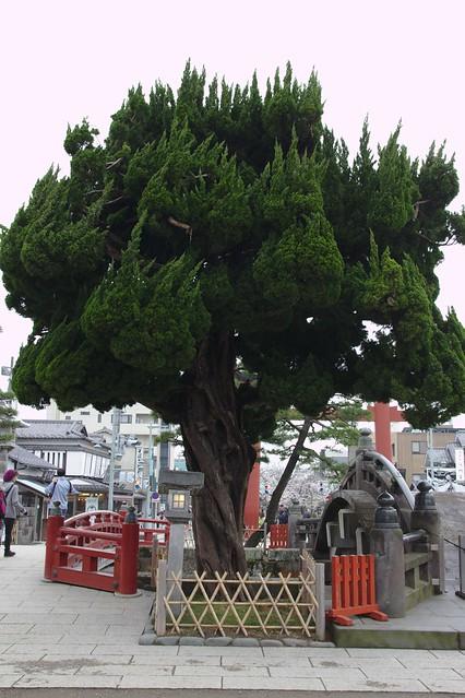 0464 - Kamakura