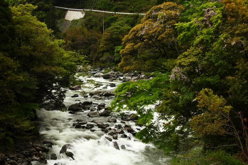 IMG_6982_4-24 Tsubayama Wandering