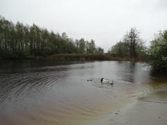 Hondenstrand Reeuwijk 2