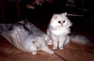 Leo & Ludvig leker