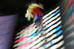 clip'n'climb, 2013