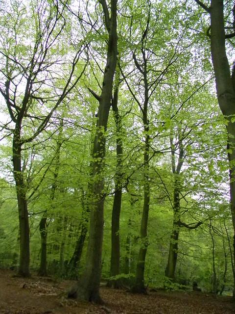 Lambridge Woods