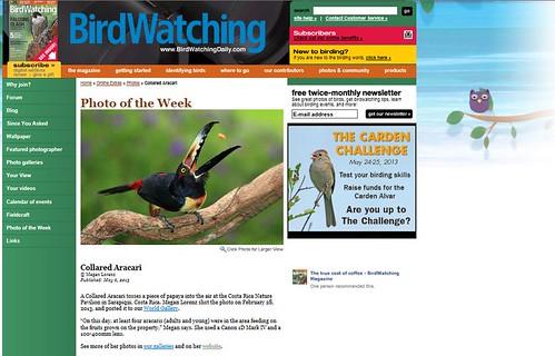 BirdWatching by Megan Lorenz