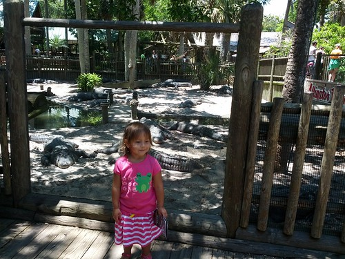 at the alligator farm un st augustine