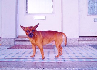 May dog