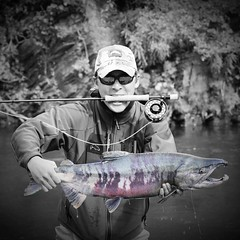 Chum Dog Millionaire @kodiaklegends #simmsfishing #alaskagrown #akflyfishing #alaskaflyfishing #fishing #flyfishing #alaskaguidelist #kodiaklegendslodge #salmon #chumsalmon #dogsalmon #keta #catchandrelease