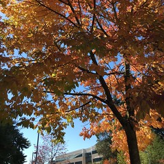 Fall is in the air for Redmond