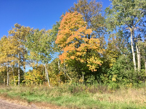 Start of fall colors in Frederic, WI