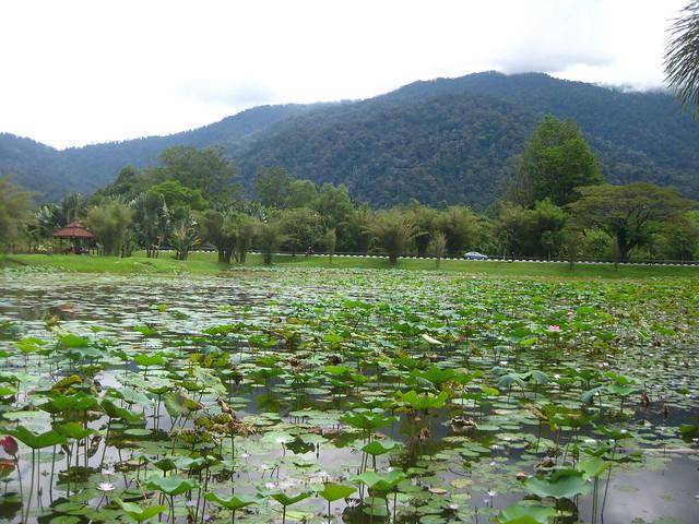 Taiping lake garden IMG_5756