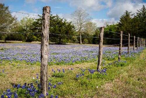 fence landscape spring nikon wildflowers d800 planart1450 zeiss50f14 zf2