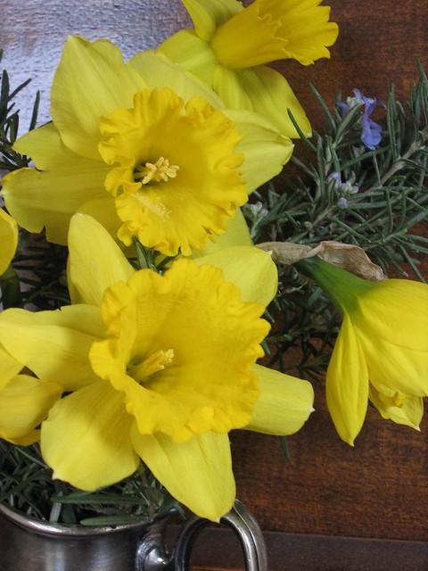 spring daffs