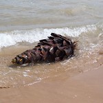 Palm Trees on Guardamar del Segura beach