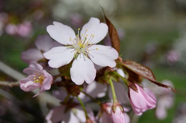 2013-4-20 spring 224