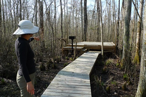Canoe Camping Platform - Bennett's Creek Paddle Trail - near Gatesville, NC