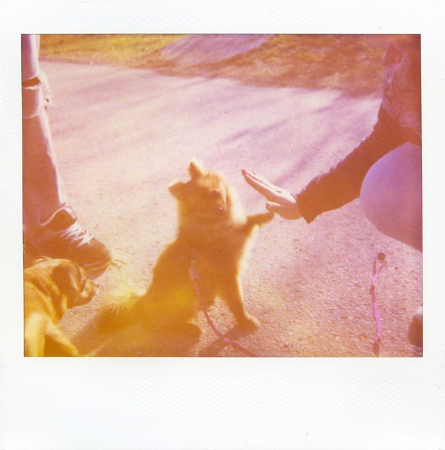 polaroid - High Five!