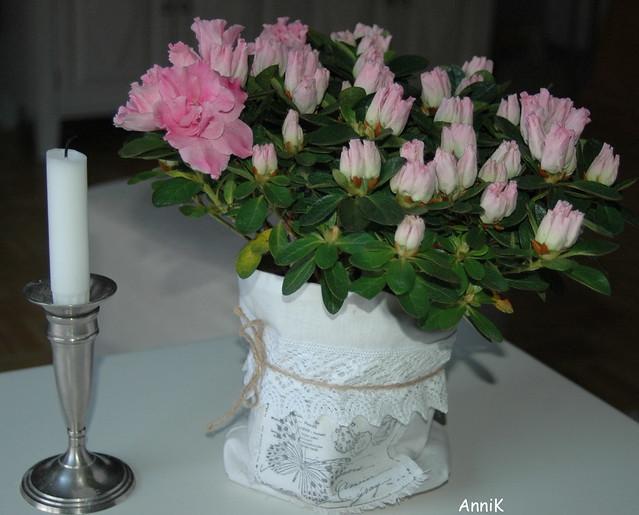 Kukkia 005