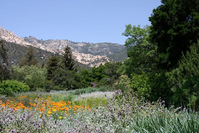 Santa barbara botanic garden flickr photo sharing for Botanical gardens santa barbara