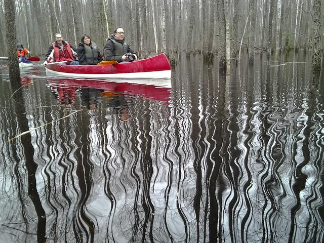Ambassador in floodpain forest