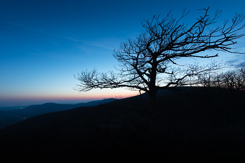 morning blue tree silhouette sunrise dawn virginia shenandoah skylinedrive shenandoahnationalpark mountmarshalloverlook