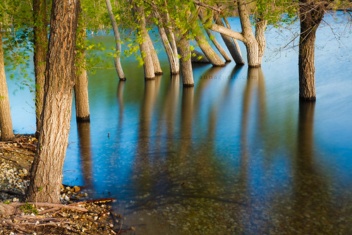 longexposure trees lake water canon flooding sigma idaho swamp 7d polarizer nampa caldwell ndfilter lakelowell 1750mm treasurevalley canyoncounty