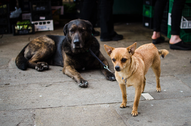 There are dogs everywhere in Venice, I spotted these two at the Rialto Market.