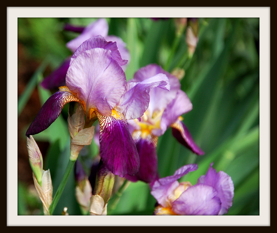 iris_framed_may_2010