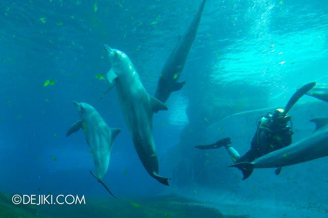 Marine Life Park Singapore - S.E.A. Aquarium - Dolphins 3