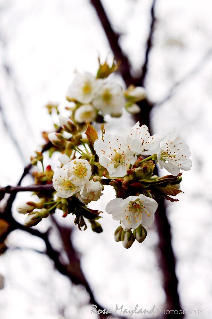 Spring 2013 May 1 5 bis