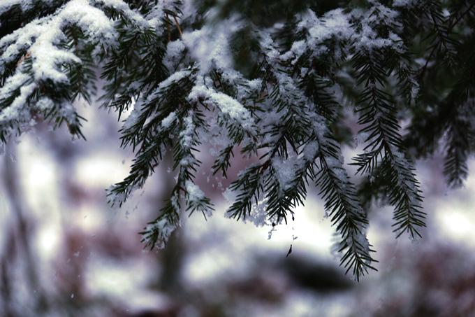 talvi 169