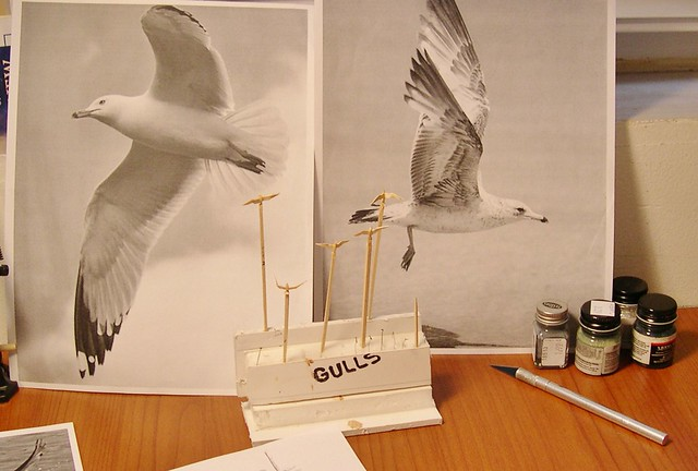 Seagulls...research and study
