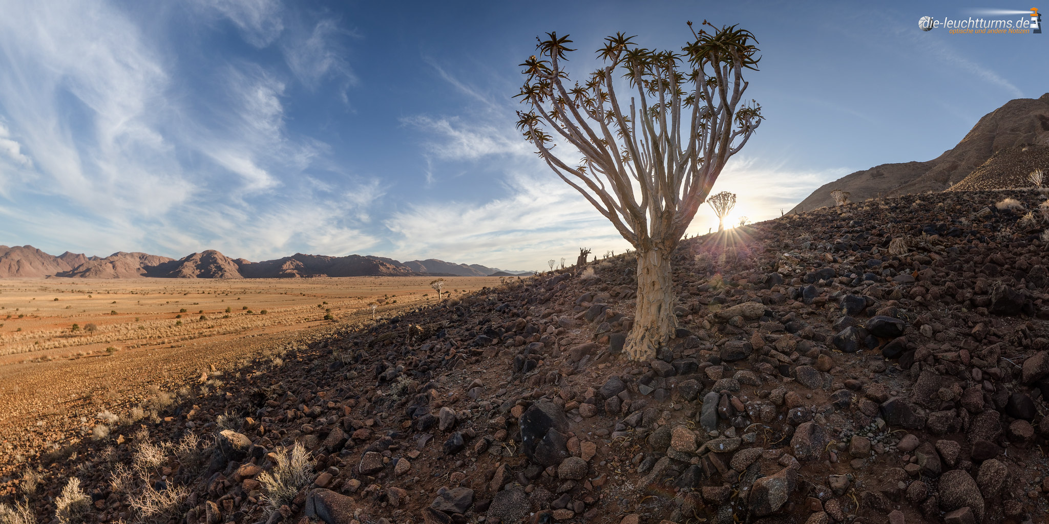 Dying Quivertree Forest