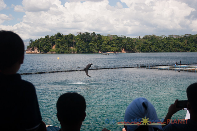 Dolphin and Whale Show-4.jpg