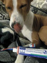 Virbac seafood flavored toothpaste... Mmm...