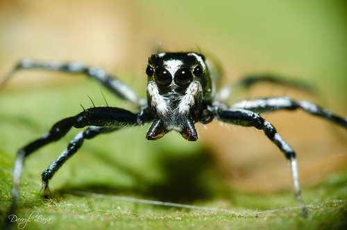 eyebrow spider (1 of 4)