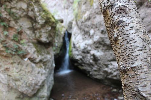 El salto del agua visto desde un tronco