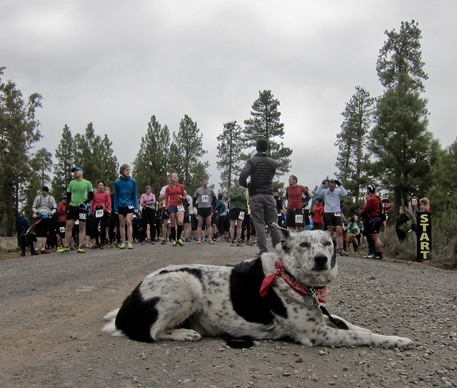 Image Result For Great Falls Dog