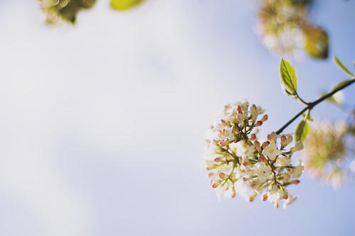 Spring arrives (Explore #2, 21.04.2013)