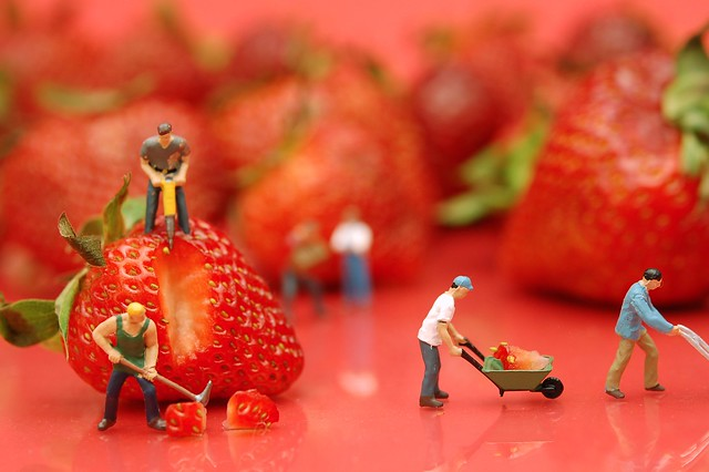 Berry Hard Work from Flickr via Wylio