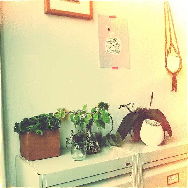 morganours planB plantes vertes