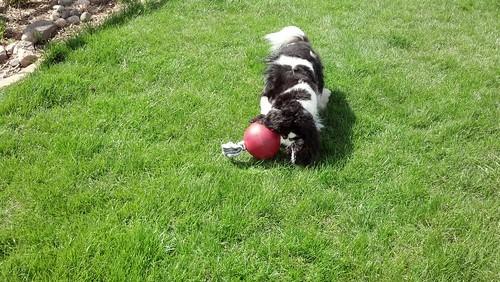 Bleys likes the jolly ball