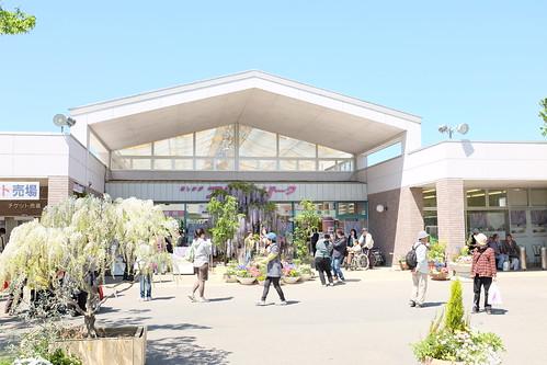 Ashikaga Flower Park 2013