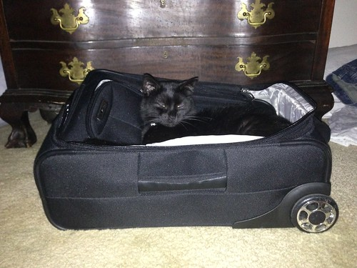 Travel cat
