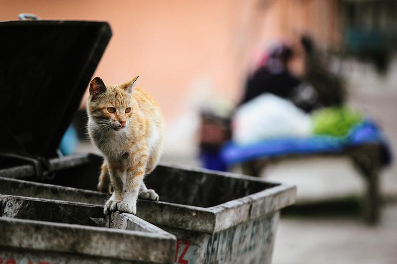 Cat Walk.