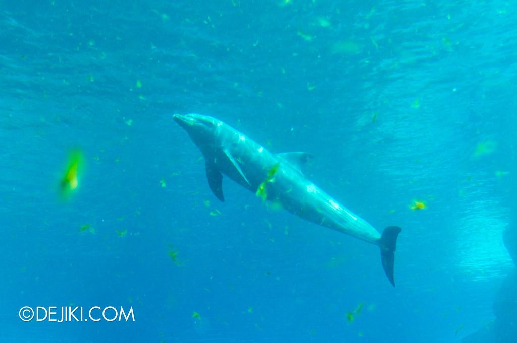 Marine Life Park Singapore - S.E.A. Aquarium - Dolphins 4