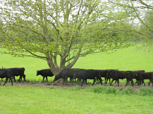 The lowing herd moving slowly oer the lee